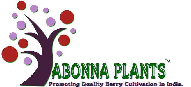 Abonna Fruits and Plants Company Pvt ltd