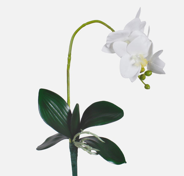 Orchid Sprig High Quality