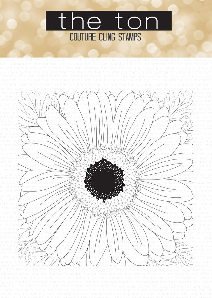 Daisy (Full View) Close Up Cling Background