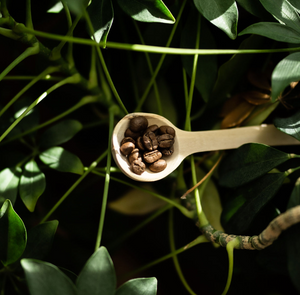 Coffee Wood Scoop