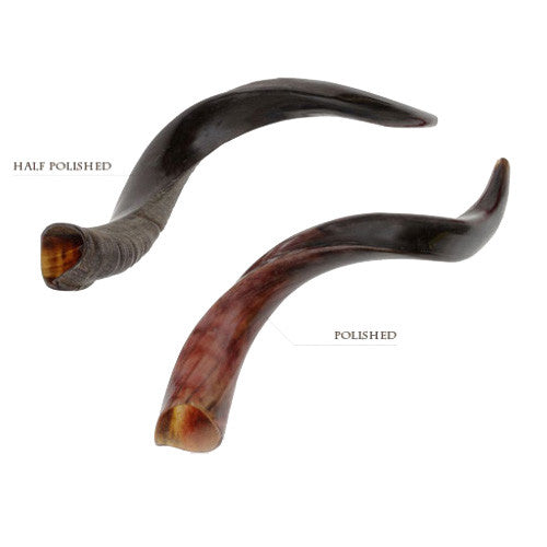 Kosher Kudu (Yemenite) Shofars -  8 Sizes Available