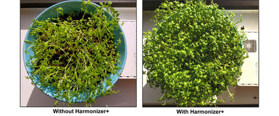 Cress Sprouts Growth Test Demonstrates EMF Protection