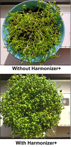 EMF Harmonizer Sprouts Growth Test