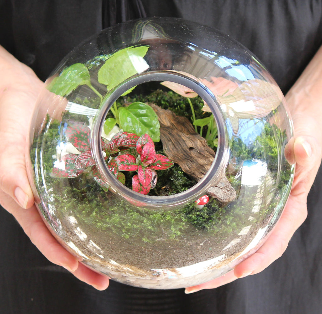 Workshop - Terrarium 27th July