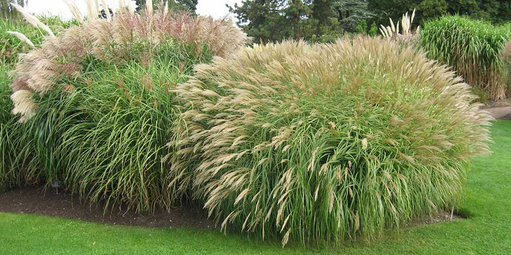 Choosing and growing grasses