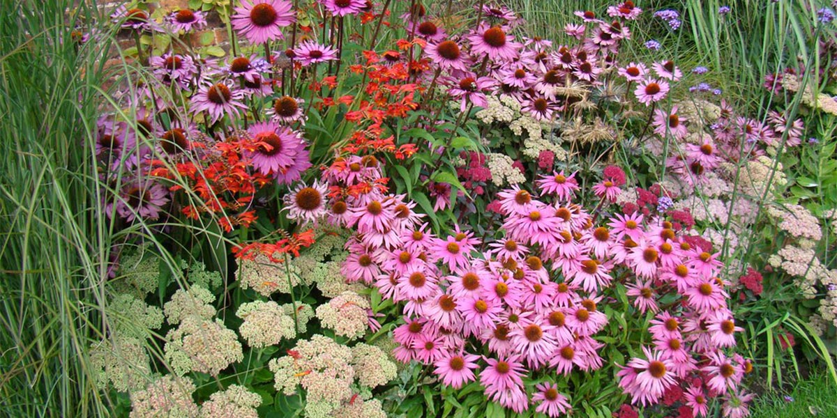 Perennials for late summer colour