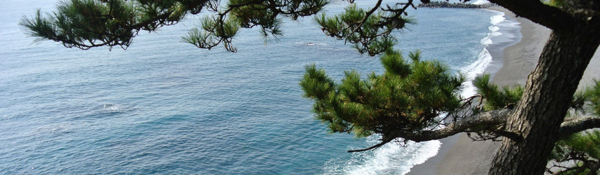 Coastal Conifers