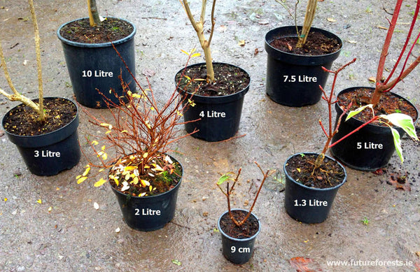 Bareroot vs Potted – Future Forests