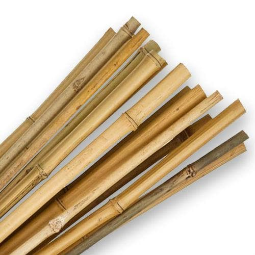 Bamboo Canes 8ft Cane - Future Forests