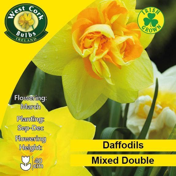 Daffodil - Mixed Double - Future Forests