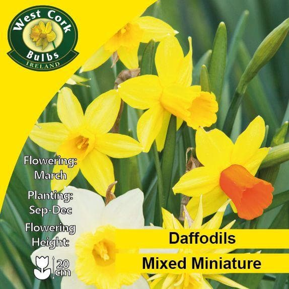 Daffodil - Mixed Miniature Narcissi - Future Forests