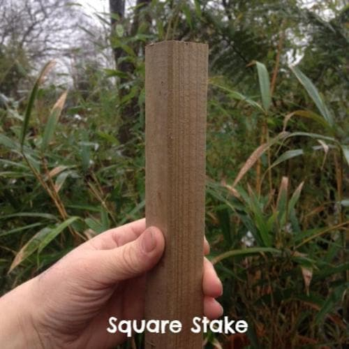 Tree Stake - Future Forests