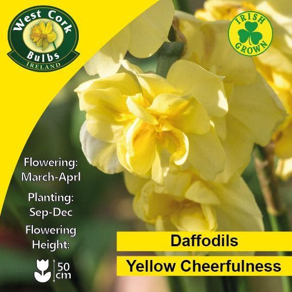 Daffodil Yellow Cheerfulness - Future Forests