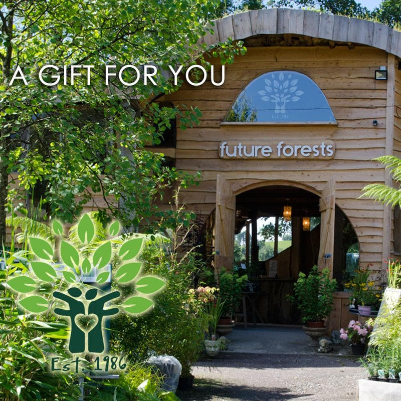 GIFT VOUCHER for our WEBSITE - Future Forests