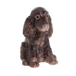 Cockerspaniel Brown