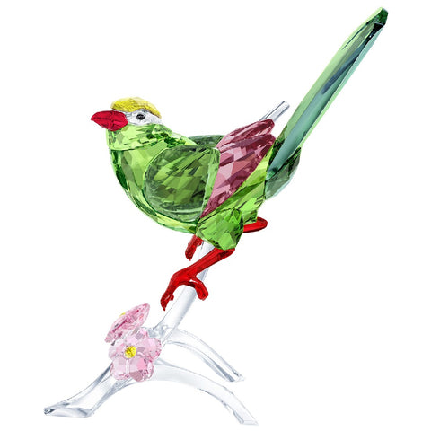 Green Magpie new 2017