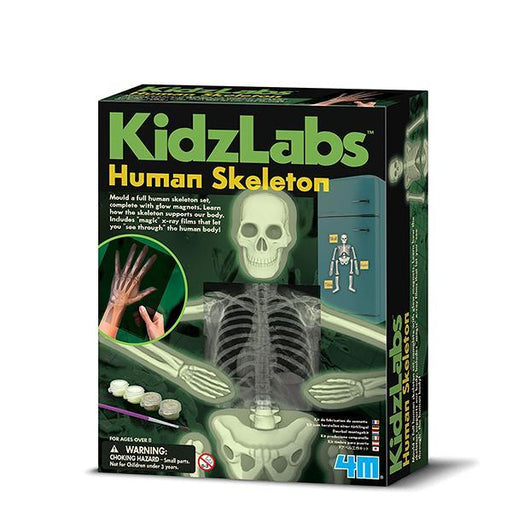 4M KidzLabs Glow Human Skeleton Science Kit - TOYTAG