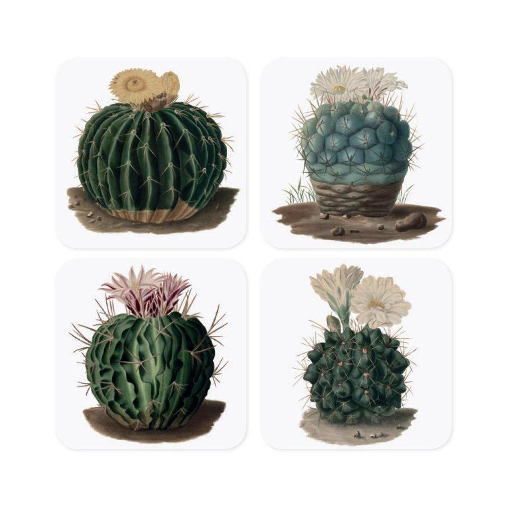 Botanical Cactus Coasters Set-Magpie-Beaumonde