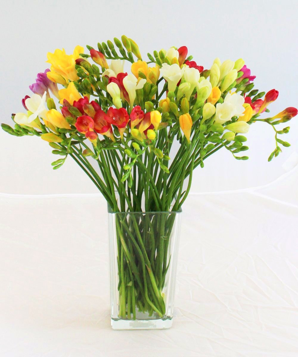Medium Guernsey Freesias - Fineflora Flowers