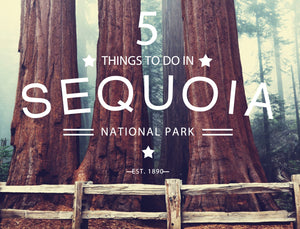 5 Things To Do In Sequoia + Kings Canyon National Park