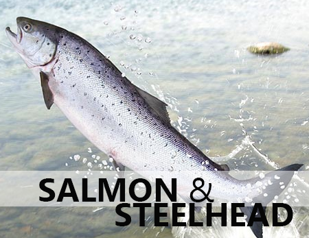 Salmon/Steelhead Cases
