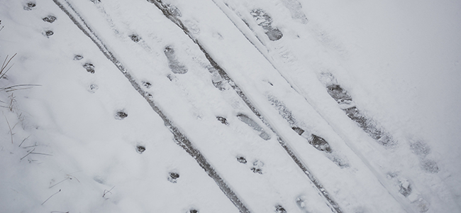 dog paw prints in snow