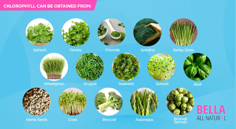 Foods With Chlorophyll