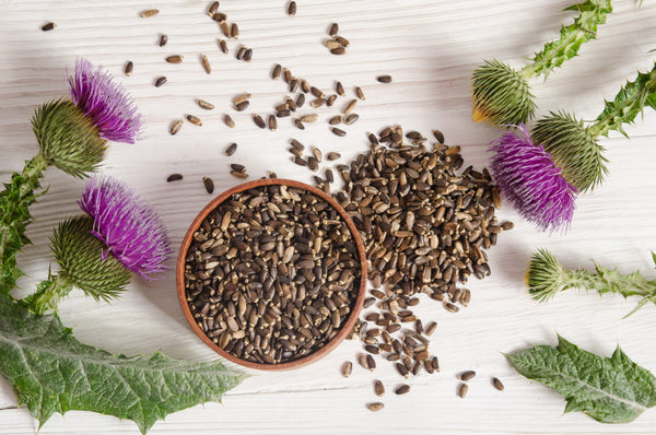 Got Milk...Thistle?: The Top Health Benefits of Milk Thistle Tea