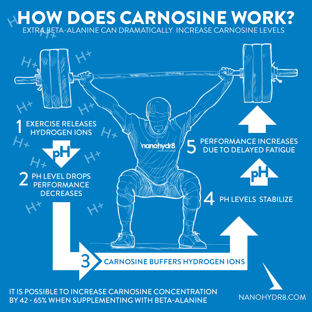 How does carnosine work?
