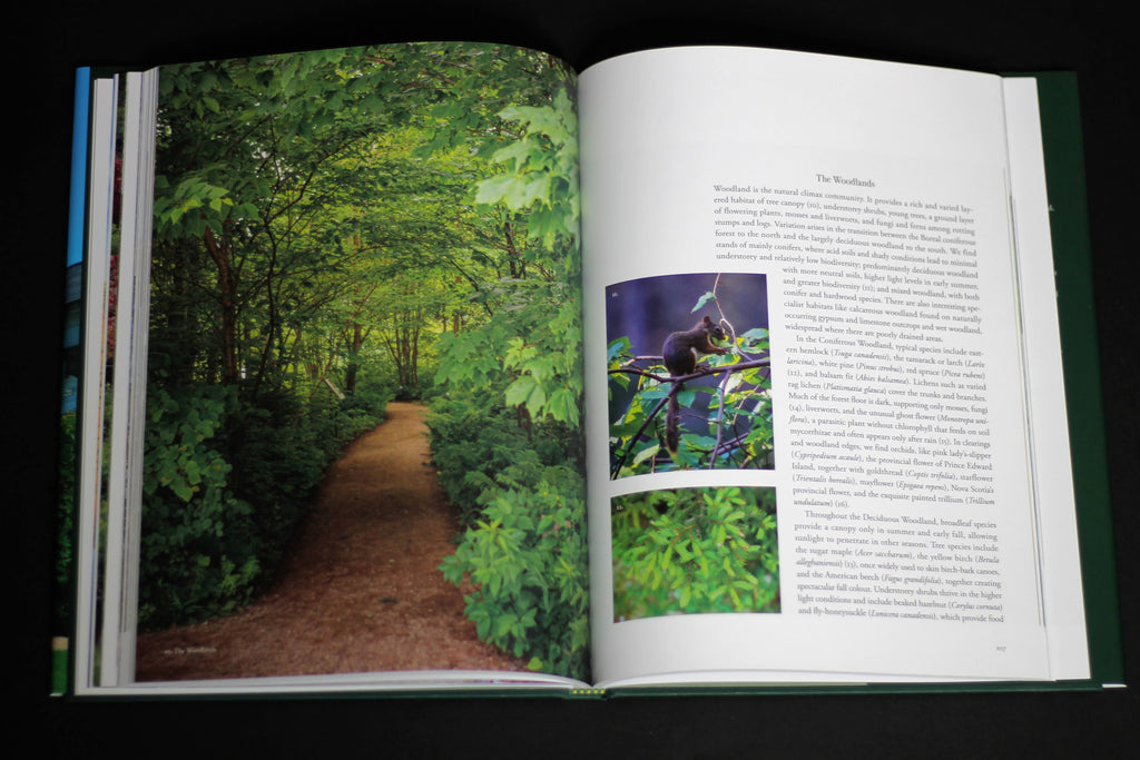 A book lies open on a dark surface. On one page, there is a photo of a path winding through a lush, green forest. On the other page, which is a stark white in contrast, there is some text and two smaller photos.