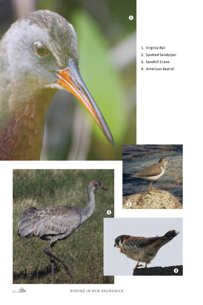 Birding in New Brunswick (eBOOK)