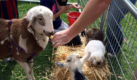 Poppy Petting Zoo at Brentwood November 14th