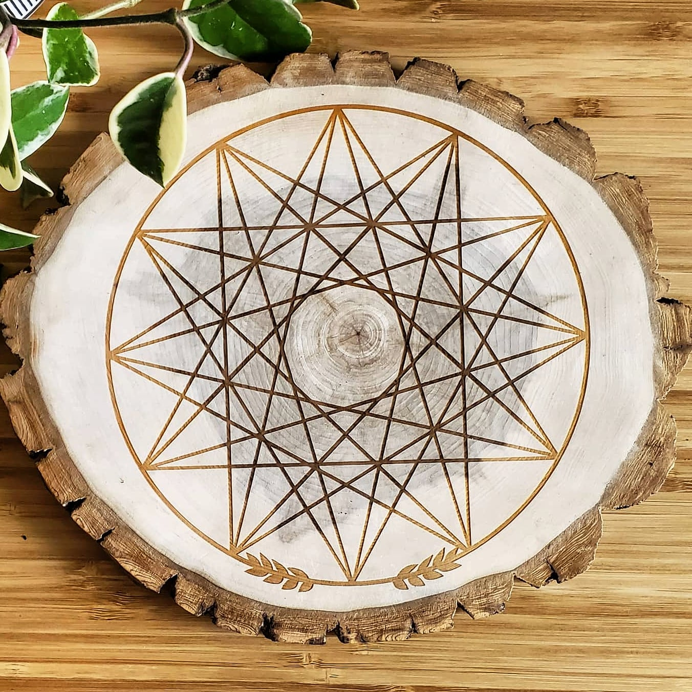 Wildcrafted Poplar Grid - Dodecagram