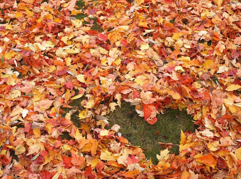 Fall Season - Time for a Whirlwind of Leaves in a Whirlwind Romance