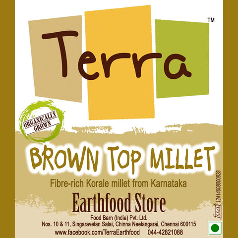 Terra-Brown Top Millet