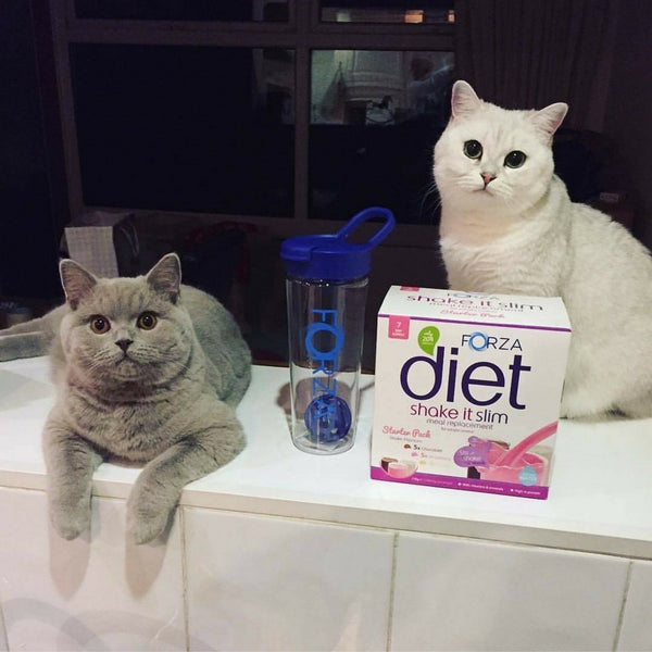 The Purrrfect Diet