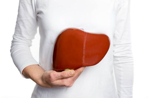How the liver aids weight loss