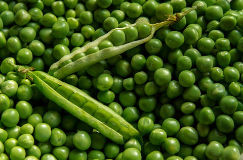peas plant based protein