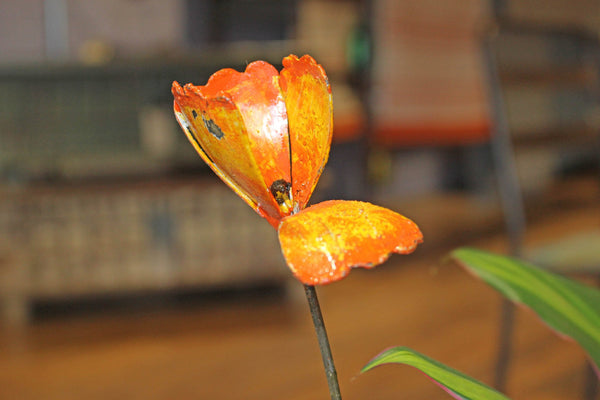 Californian Poppy Recycled Metal - HomeStreetHome.ie