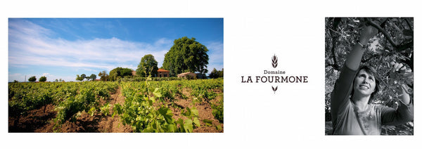 Domaine La Fourmone | The French Wine Project