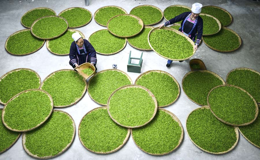 growth of tea industry