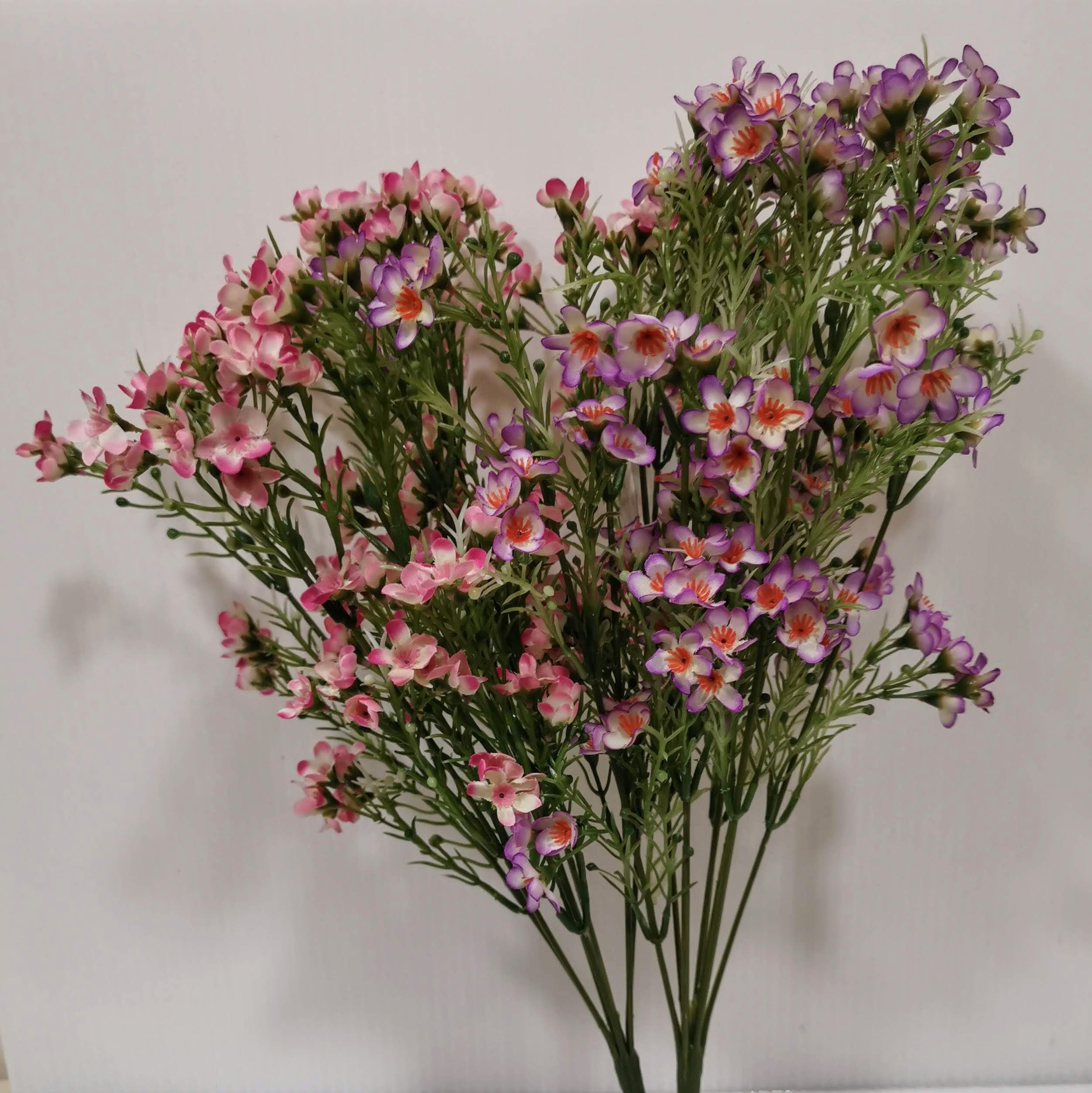 Pale Pink Wax Flower Bunch