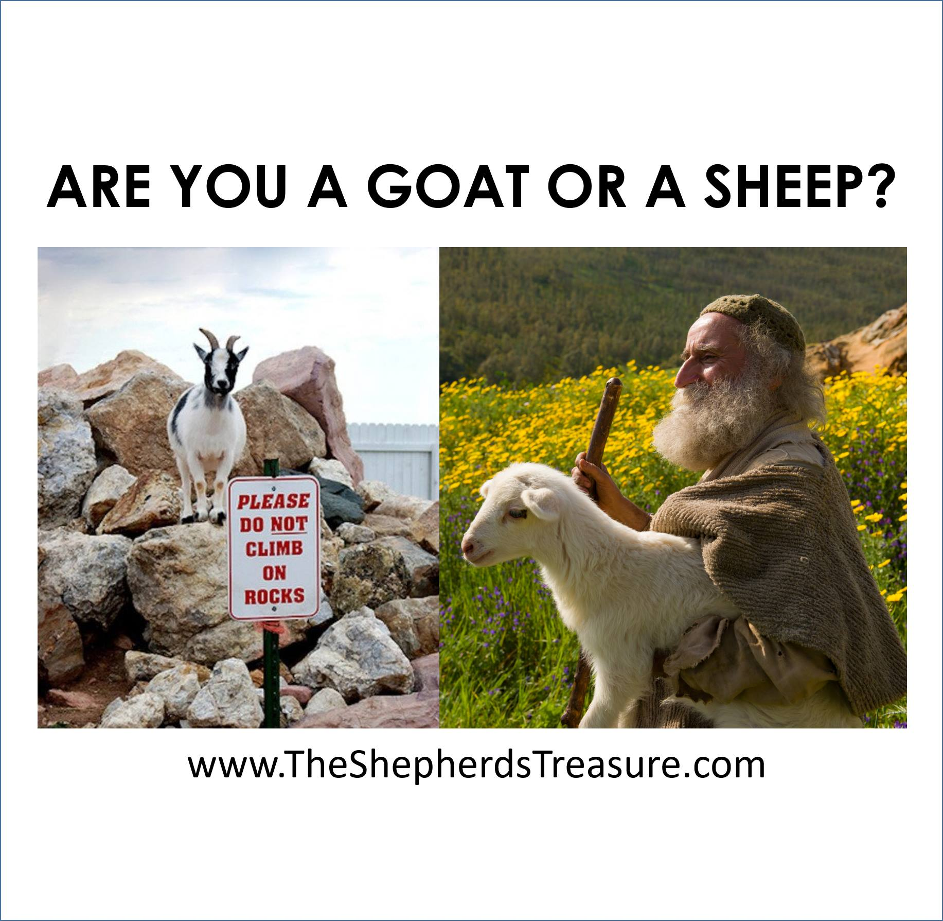 Are you a Goat or a Sheep?
