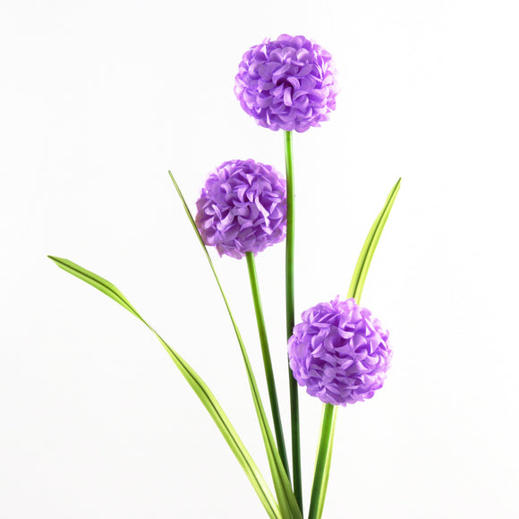 Allium Cristophii (Star of Persia)