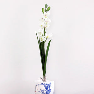 Cymbidium Orchid with leaves