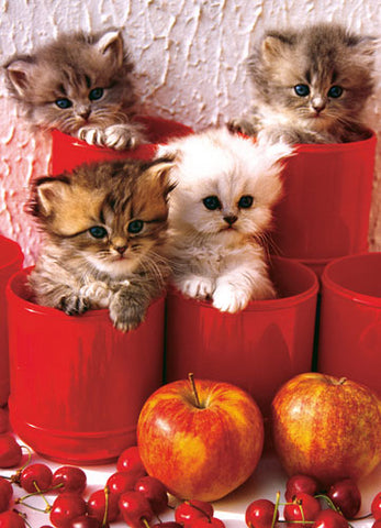 KITTENS IN POTS 1000PC PUZZLE