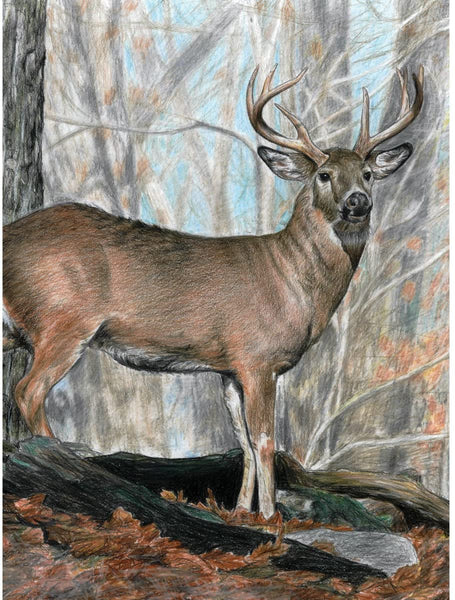 Color by Number Whitetail Buck
