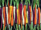 Carrots 300pc Large Piece Puzzle
