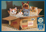 Six Pack 500pc Puzzle