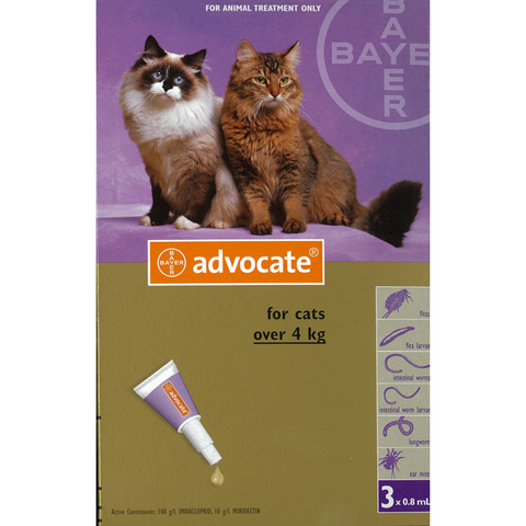 Advocate for Large Cats (4-8kg)